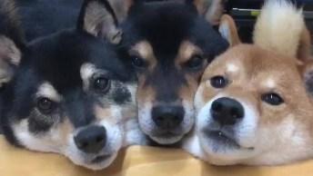 Cachorros Fazendo Dengosinho Para Seu Dono, Olha Só Que Fofura!
