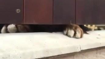 Cachorros Felizes Por Ver Alguém Chegar Em Casa, Muito Fofos, Confira!