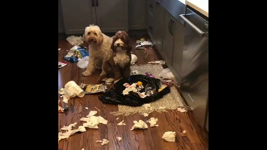 Cachorros foram pegos fazendo arte
