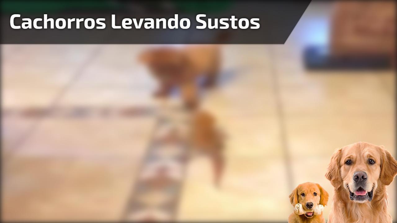 Cachorros levando sustos