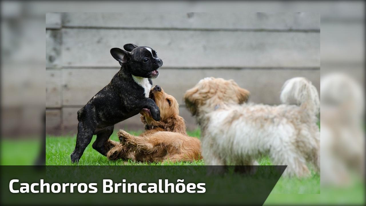 Cachorros brincalhões