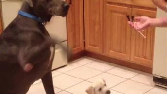 Cachorros Mais Divertidos Do Dia, Veja O Que Eles Aprontam Hahaha!