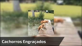 Cachorros Mais Engraçados Do Dia, O Que Eles Aprontam Vai Te Fazer Rir!