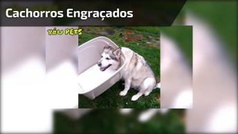 Cachorros Mais Engraçados Do Dia, Você Vai Dar Muitas Risadas Hahaha!