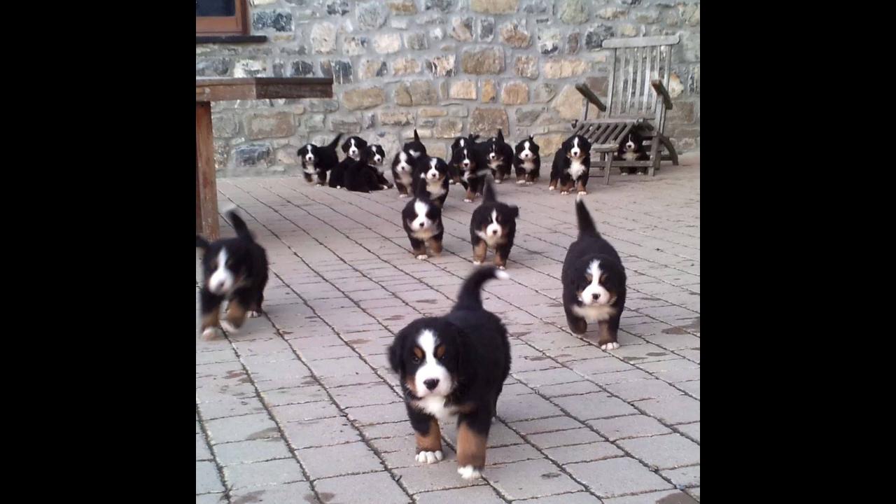 Cachorros mais fofos da internet