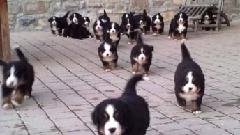 Cachorros Mais Fofos Da Internet, São Muitos Filhotes Juntos Para Te Alegrar!