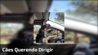 Cachorros No Comando, Agora Eles Querem Dirigir Hahaha!
