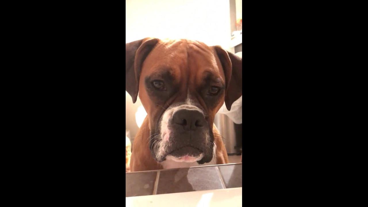 Cachorros observando a mamãe na banheira