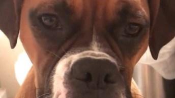 Cachorros Observando A Mamãe Na Banheira, 3 Guarda Costas, Hahaha!