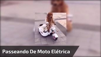 Cachorros Passeando De Motinha Elétrica, Só Cabe Os Melhores Amigos!