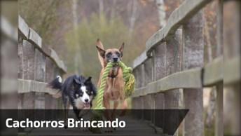 Cachorros Pegam Papel Higiênico E Deixam A Casa De Sua Dona Cheia De Papel!