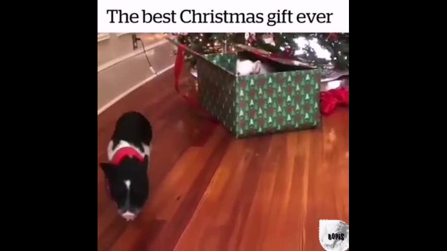 Cachorros pronto para o Natal