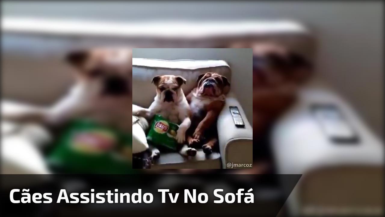 Cães assistindo Tv no sofá