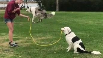 Cachorros Pulando Corda, Veja Que Imagem Mais Fofa Neste Vídeo!