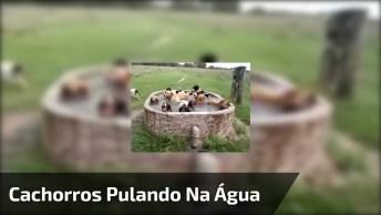 Cachorros Pulando Na Água, Aqui A Diversão É Certa, Confira!