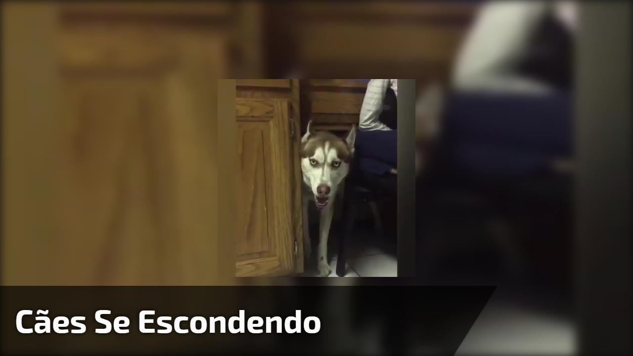 Cães se escondendo