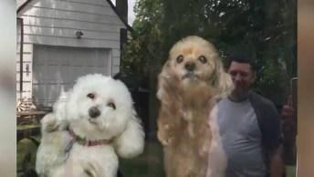 Cachorros Recebendo Seus Donos Depois De Muito Tempo Sem Eles!