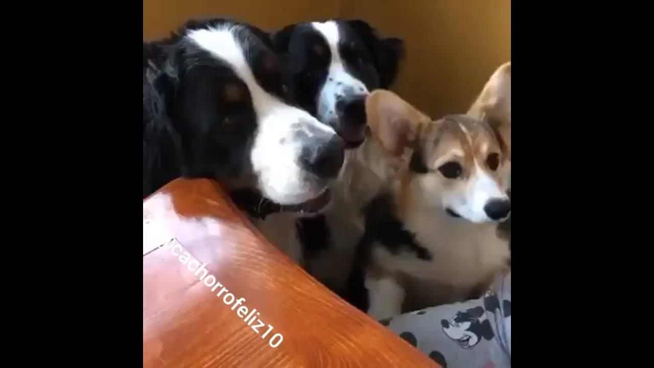 Cachorros revezando para comer, é um de cada vez