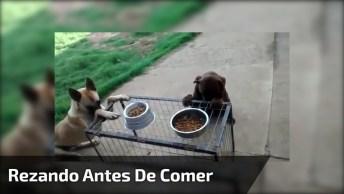 Cachorros Rezam Antes De Comer, Um Exemplo Para Muitas Crianças!