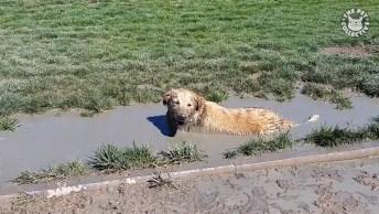 Cachorros São Eternas Crianças, Veja O Vídeo E Entenda O Motivo!