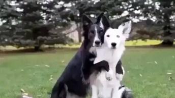 Cachorros Se Abraçando Para Tirar Uma Foto Bem Legal, Confira!