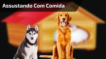Cachorros Se Assustam Com Comida Com Formato De Filhote Sendo Partida Ao Meio!