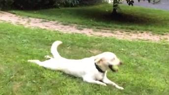 Cachorros Sendo Arrastados, Esses Bichos Quando Grudam Em Algo, Tem Que Deixar!