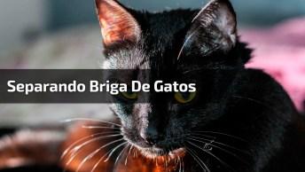 Cachorros Separando Briga De Gatos, Eles Colocaram Ordem Na Bagunça!
