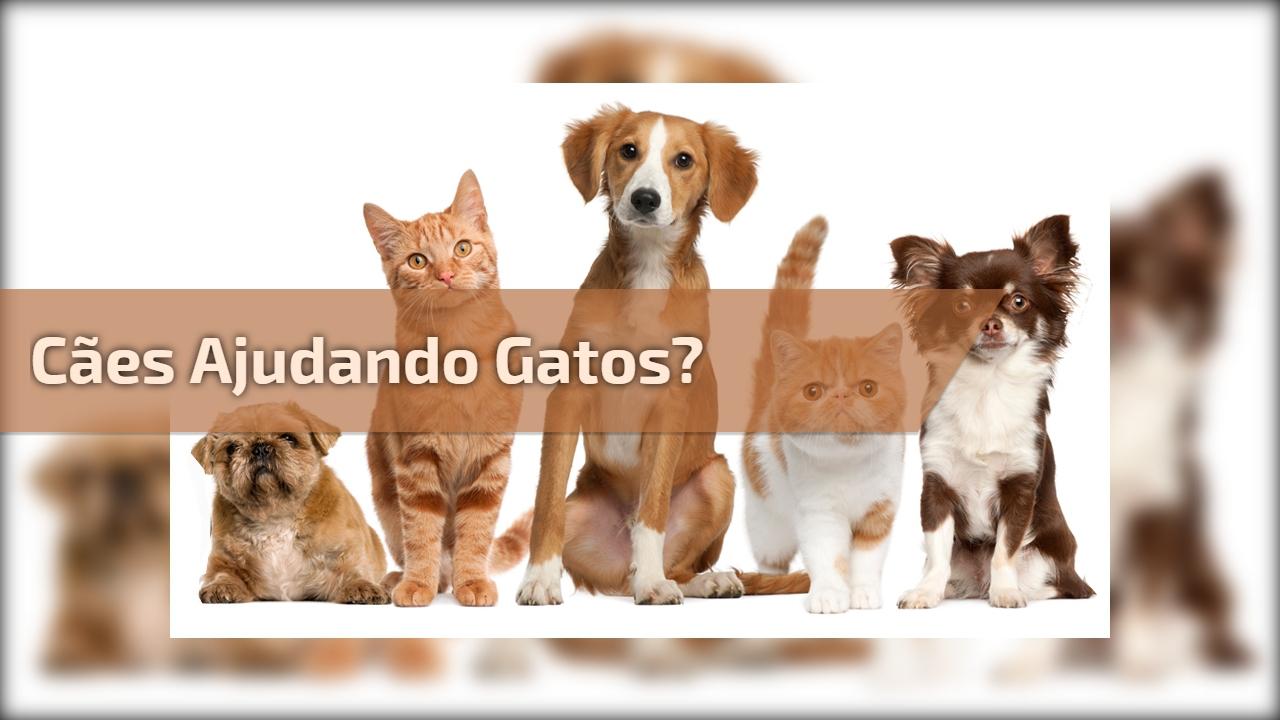 Cães ajudando gatos?