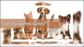 Cachorros Separando Briga De Gatos, Olha Só Que Vídeo Hilario!