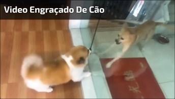 Cachorros Só Brigam Quando A Porta De Vidro Esta Fechada, Veja Quando Abrem!