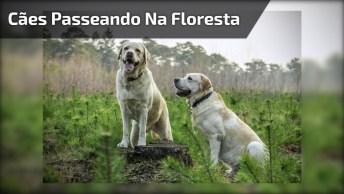 Cachorros Tendo Um Dia De Alegria Na Floresta, Eles Nunca Vão Esquecer!