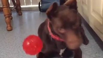 Cachorros Tentando Pegar A Bolinha, Olha Só A Aflição Deste Amiguinho!