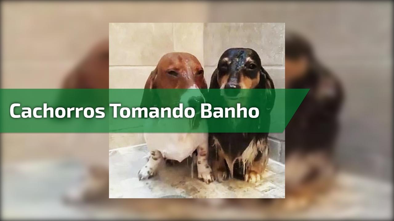 Cachorros tomando banho - Eles são umas fofuras que contagiam!