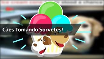 Cachorros Tomando Sorvete, Olha Só Como Eles Gostam Desta Sobremesa!