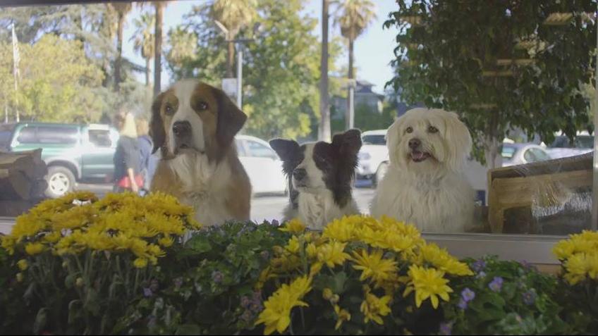 Cachorros trabalhando em equipe em comercial do Doritos, kkk!!!