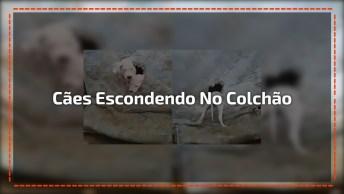 Cachorros Usam Colchão Para Se Esconderem, Veja Quantos Estavam La Dentro Hahaha