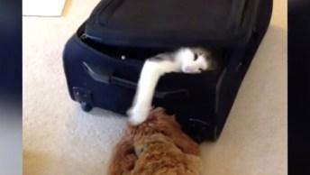 Cachorros Versus Gatos, Um Relacionamento De Amor E Ódio Eterno!