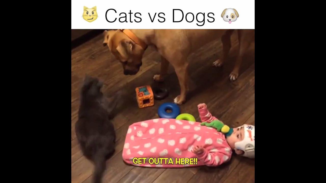 Cachorros versus gatos, uma guerra que jamais vai ter fim