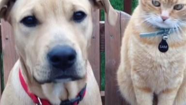 Cachorros Versus Gatos, Uma Relação De Amor E Ódio Eterno, Hahaha!