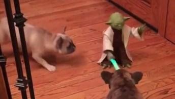 Cachorros Versus Mestre Yoda, Hahaha! Cuidado As Cenas São Fortes Desta Luta!