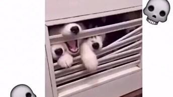 Cachorros Zumbis Atacando Uma Casa, Cuidado As Cenas São Fortes!