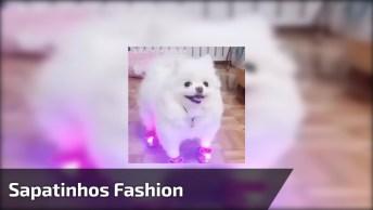 Cadelinha Com Os Sapatinhos Mais Fashion Que Você Já Viu, Olha Só Que Linda!