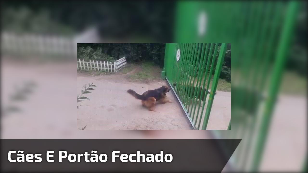 Cães e portão fechado