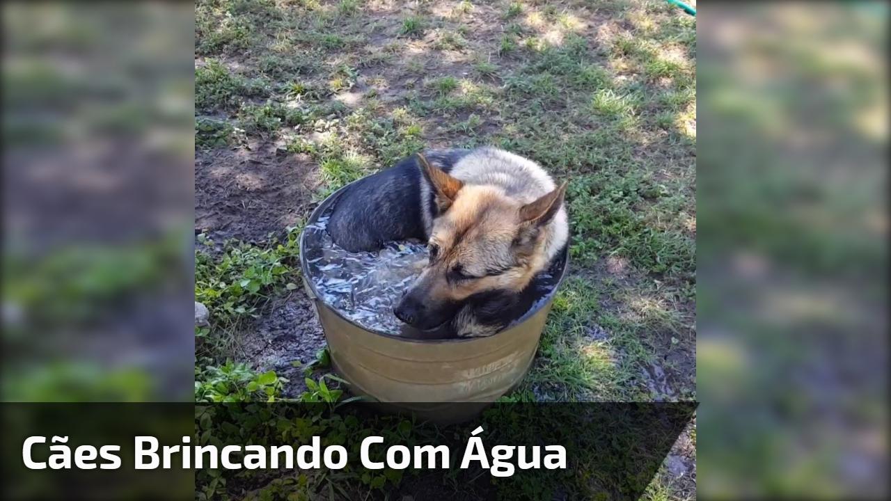 Cães brincando com água