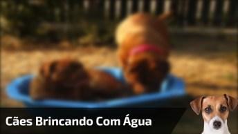 Cães Brincando Com Água, Veja Como Essa Galerinha Adora Se Refrescar!