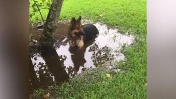 Cães Brincando Na Água E Na Lama, Olha Só Como Eles Amam Esta Brincadeira!