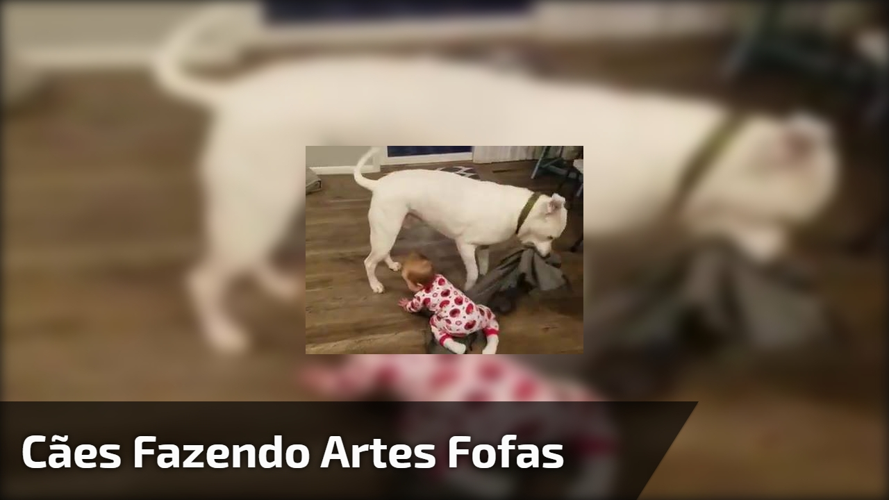 Cães fazendo artes fofas