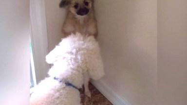 Cães Como Não Amar Estes Animais Que Só Nos Trazem Sorrisos!