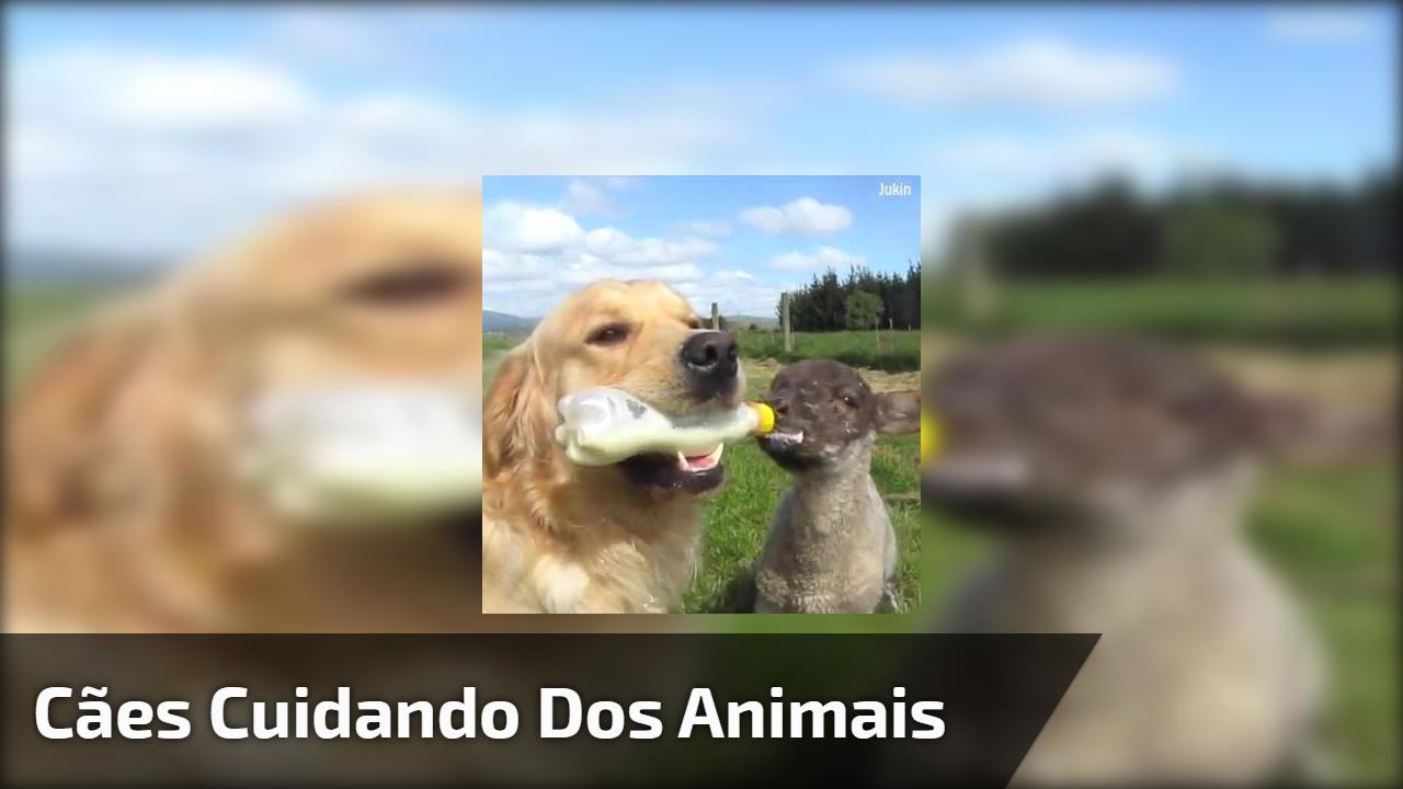 Cães cuidando dos animais